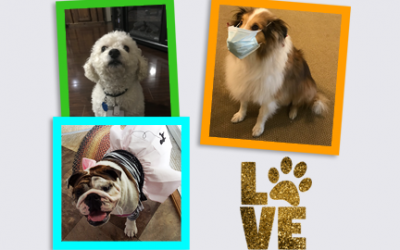 The Dogs of Cedar Haven Healthcare Center